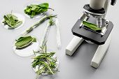 Safety Food. Laboratory For Food Analysis. Herbs, Greens Under Microscope On Grey Background Top Vie poster