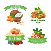 Banners Or Labels With Nuts And Seeds. Cola Nut, Pumpkin Seed, Peanut And Sunflower Seeds. Pistachio poster