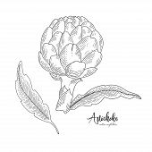 Isolated Artichoke. Engraved Art. Organic Sketched Vegetarian Objects. Vegetarian Food For Design Me poster