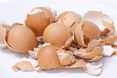 Eggs Shell Scattered