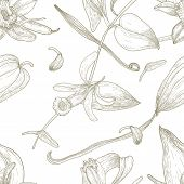 Botanical Seamless Pattern With Vanilla, Leaves, Flowers, Fruits Or Pods Hand Drawn With Contour Lin poster