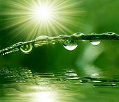 Fresh Grass with Dew drops schließen sich