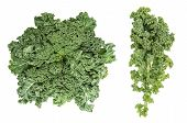 Kale Cabbage. Green Vegetable Leaf Isolated On White Background. Healthy Eating. Super Foods poster