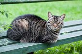 Lonely Tabby Cat On The Bench Outside poster