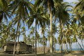 A Secluded Old Wooden House Among Coconut Trees