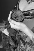 Valentines Day, Birthday, Holiday Celebration. Rose Flower In Female Hand In Dress On Dark Backgroun poster