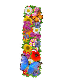 picture of alphabet letters  - alphabet of flowers and butterfly - JPG