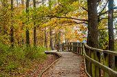 Wooden Walkway In Juniper Valley In Autumn. Lithuania. poster