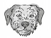 Retro Cartoon Style Drawing Of Head Of A Border Terrier , A Domestic Dog Or Canine Breed On Isolated poster