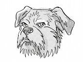 Retro Cartoon Style Drawing Of Head Of A Brussels Griffon, A Domestic Dog Or Canine Breed On Isolate poster