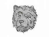 Retro Cartoon Style Drawing Of Head Of A Chow Chow, A Domestic Dog Or Canine Breed On Isolated White poster