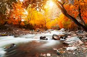 Yellow Autumn Forest And Katun River In Altai Mountains, Siberia, Russia. Long Exposure Shoot. Beaut poster