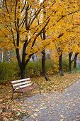 Walking Path In The Park Strewn With Colorful Maple Leaves. Empty Bench On A Walkway Surrounded By T poster