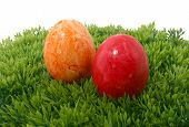 Eastereggs On Grass