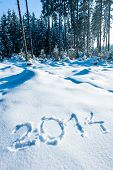 Year 2014 in Winter Forest