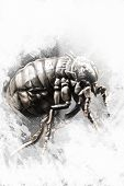foto of lice  - Louse illustration made with digital tablet - JPG