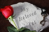 stock photo of dog-rose  - A concrete stone helps to remember a pet that has died - JPG