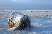 Snow On Bale Of Hay