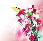 stock photo of carnations  - Pink carnation flowers with a butterfly on soft light background - JPG