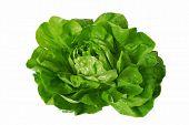 Green Lettuce Isolated Over White