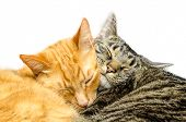 foto of snoopy  - Two cats sleeping together - JPG
