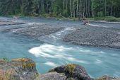 Hoh River In Rainforest
