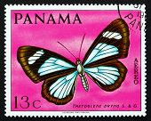 Postage Stamp Panama 1968 Tmetoglene Drymo, Butterfly