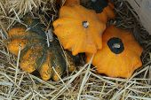star-shaped gourds in hay