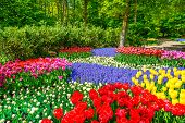Red Tulip Garden In Spring Background Or Pattern