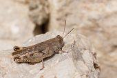 Closeup Of A Grasshopper