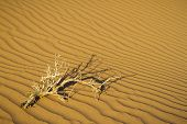 picture of barchan  - Sandy waves in the Sahara Desert - JPG