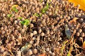 image of penicillium  - scene timber mushrooms as illustration autumn harvest - JPG