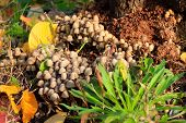 stock photo of penicillium  - scene timber mushrooms as illustration autumn harvest - JPG