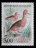 France Postage Stamp, Ferruginuous Duck