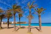image of costa blanca  - Javea playa del Arenal beach in Mediterranean Alicante at Xabia Spain palm trees - JPG