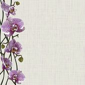 Pale background with purple orchid flowers, stems and buds