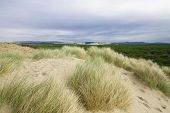 Beach Grass Overlooking The Oregon Dunes