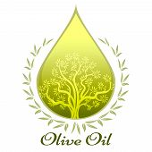 picture of drop oil  - Olive oil emblem with a glowing green drop of extra virgin olive oil containing an olive tree vector illustration - JPG