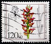 Postage Stamp Germany 1984 Anacamptis Coriophora, Orchid