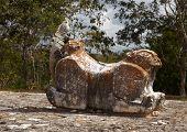 Iguana Reigns