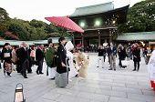 Tokyo, Japan - November 23, 2013: Japanese Wedding Ceremony At Meiji Jingu Shrine