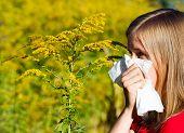 Bad Ragweed Allergy
