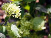 White and green summer flower
