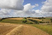 Summer Agricultural Landscape