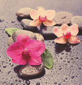 Beautiful blooming orchid with spa stones, close-up