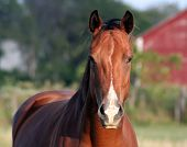 pic of brown horse  - A concerned horse on a farm - JPG