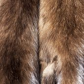 Постер, плакат: Skins of a sable for warm coat