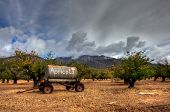 Majestic clouds over the apricot orchard