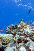 Colorful Coral Reef With Hard Corals And Exotic Fishes At The Bottom Of Tropical Sea