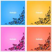 Corner of butterflies